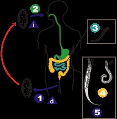 gejala penyakit papillomatosis