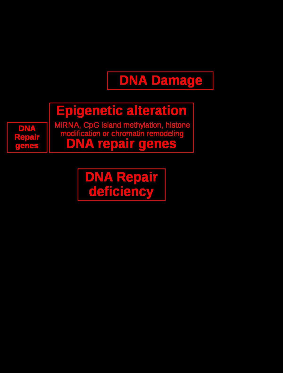 májrák genetikai