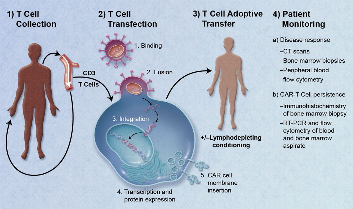 ami az 1. stádiumú rák