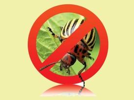 Figyelem! A rovarirtószerek befolyásolhatják a gyermekek szellemi fejlődését