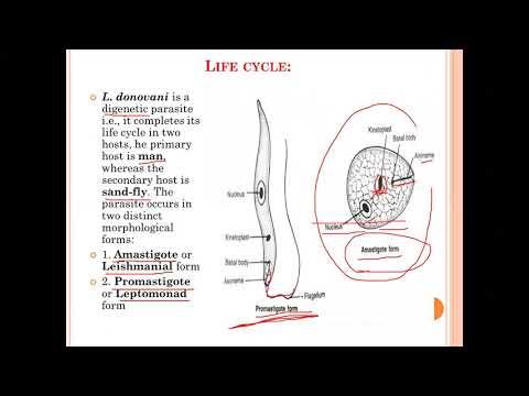intraductalis papillomatosis jelentése