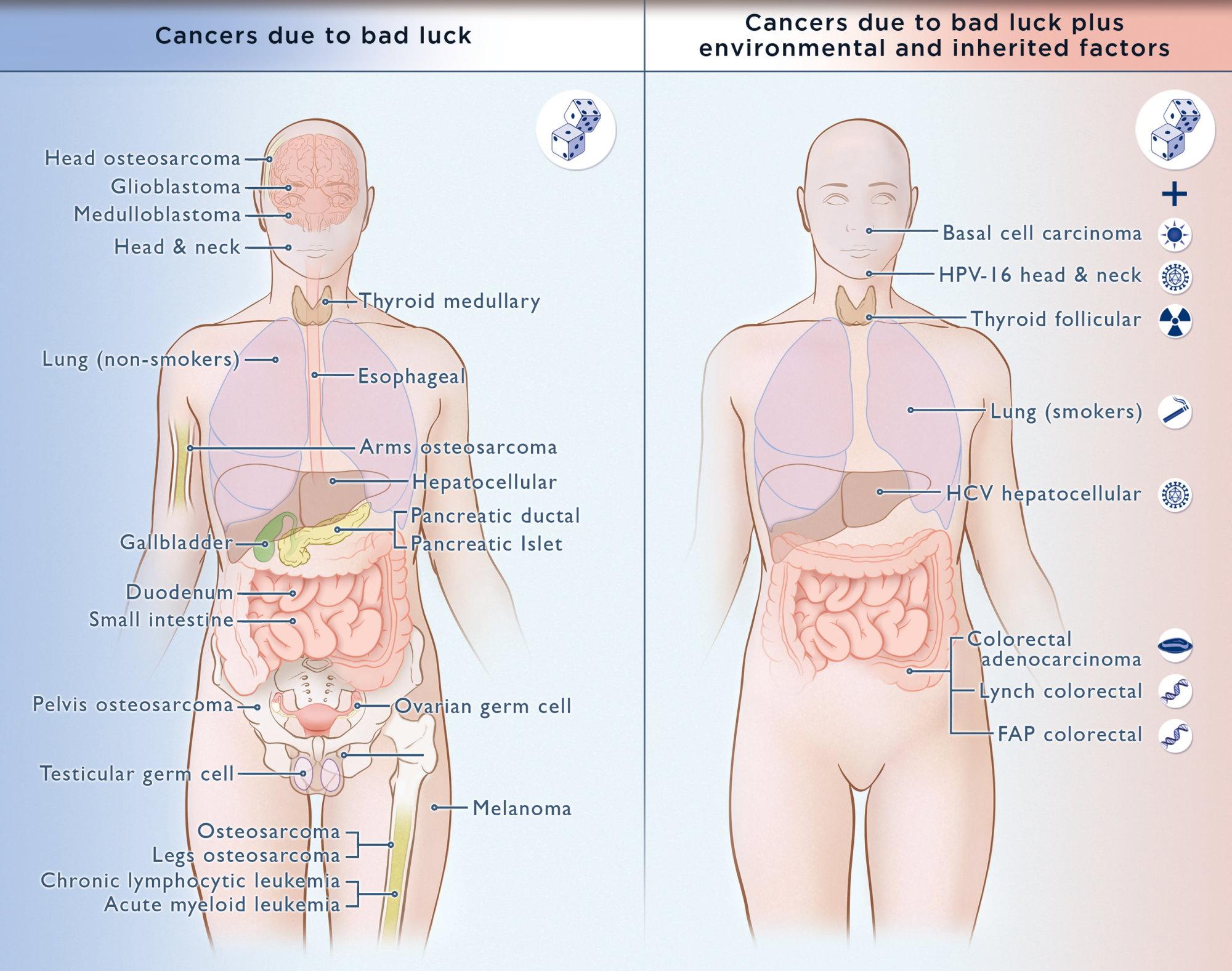 A középgarat tumorok 40 százalékát a HPV okozza – Semmelweis Médiasarok
