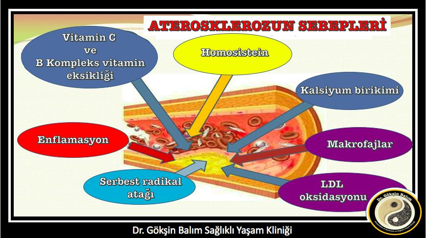Vitamin Sziget - Betegségek / Szemölcsök