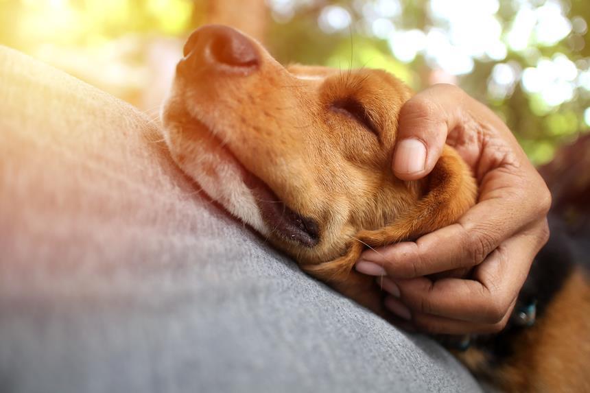 giardia leczenie psa)