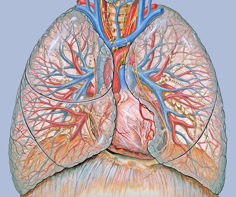 nyaki rák élettartama