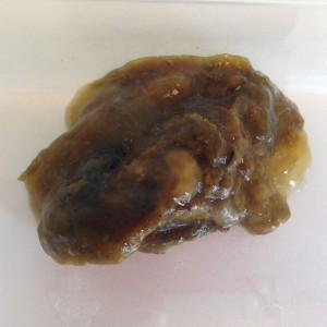 Giardia hond dodelijk