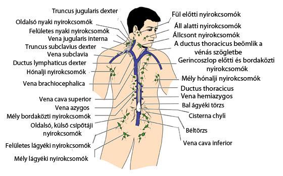 hpv nyaki nyirokcsomók)