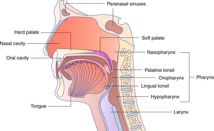 Intraduktális emlőpapilóma - Melanóma