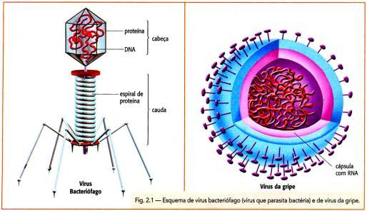 vírusbiológia 5 megrontott)