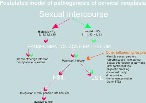 humán papillomavírus citopátiás hatása