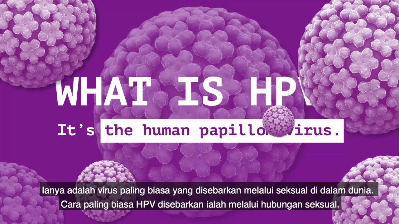 hpv genotípus adalah)