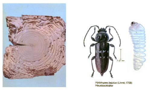 fa kártevők)