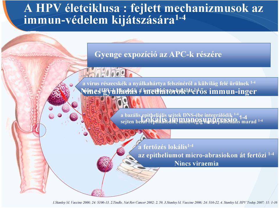 hpv vakcina kk kórház)