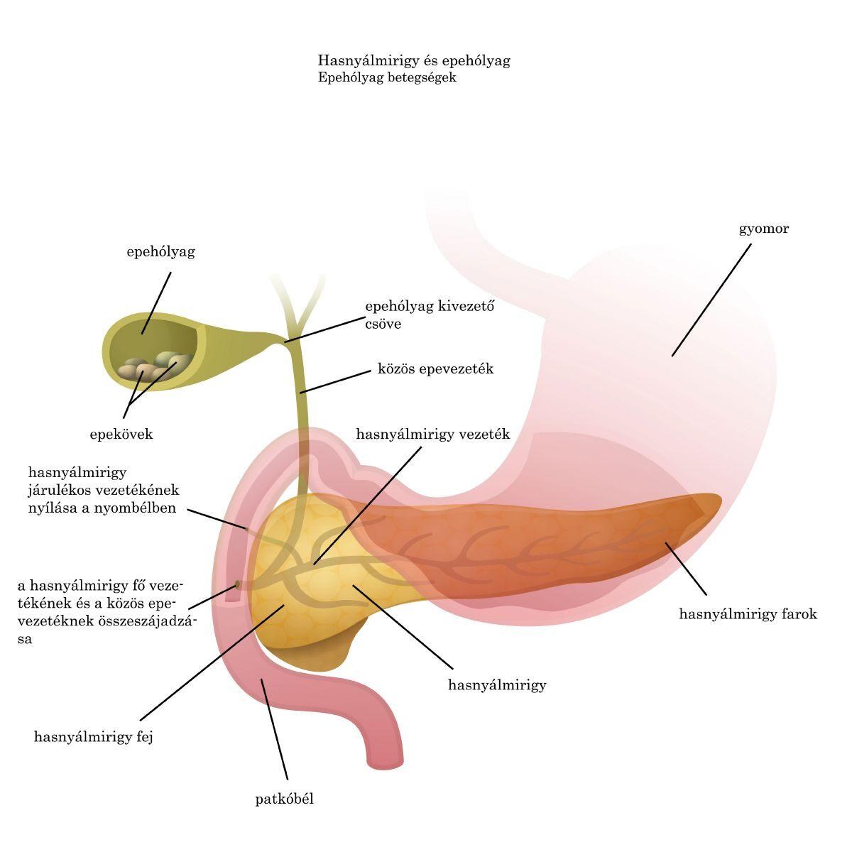 Arcparaziták diagnózisa