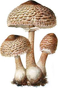 gombák és paraziták a testben)