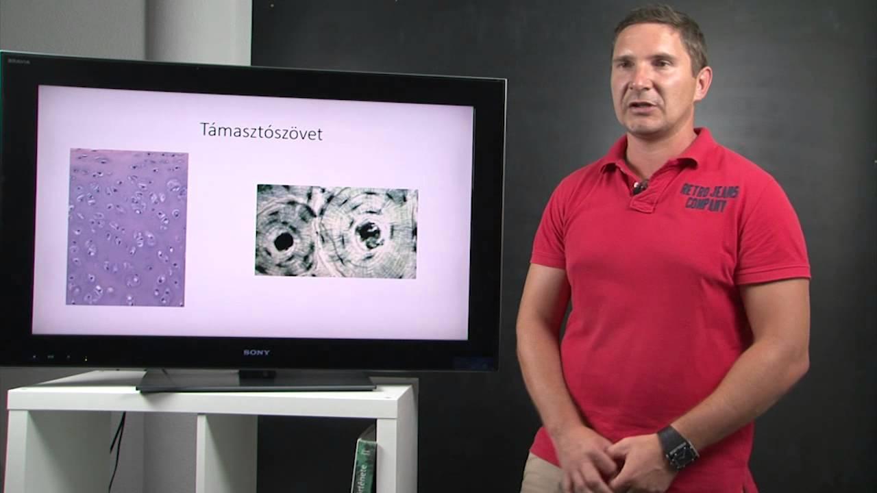 Mit kell kezelni a babaférges férfiak számára - Platyhelminthes baleset tanfolyam