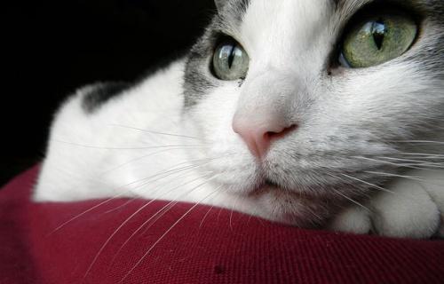 Giardiosis kutyában és macskában A giardiasis ismételt kezelése felnőtteknél