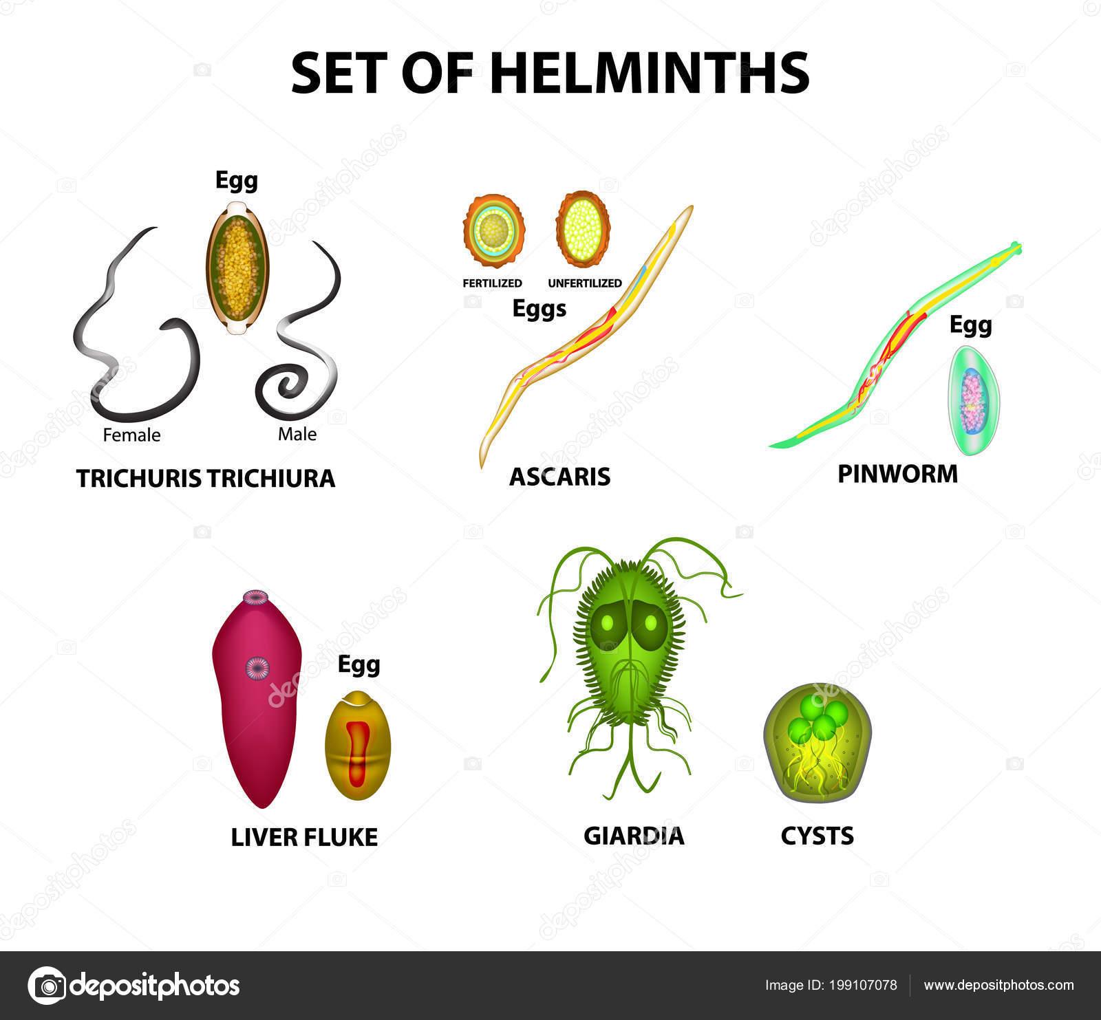 Típusú helminth tojások, Általános információk