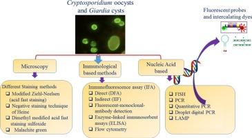 screen giardia cryptosporidium)