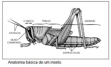 nemathelminthes gambar anatómia