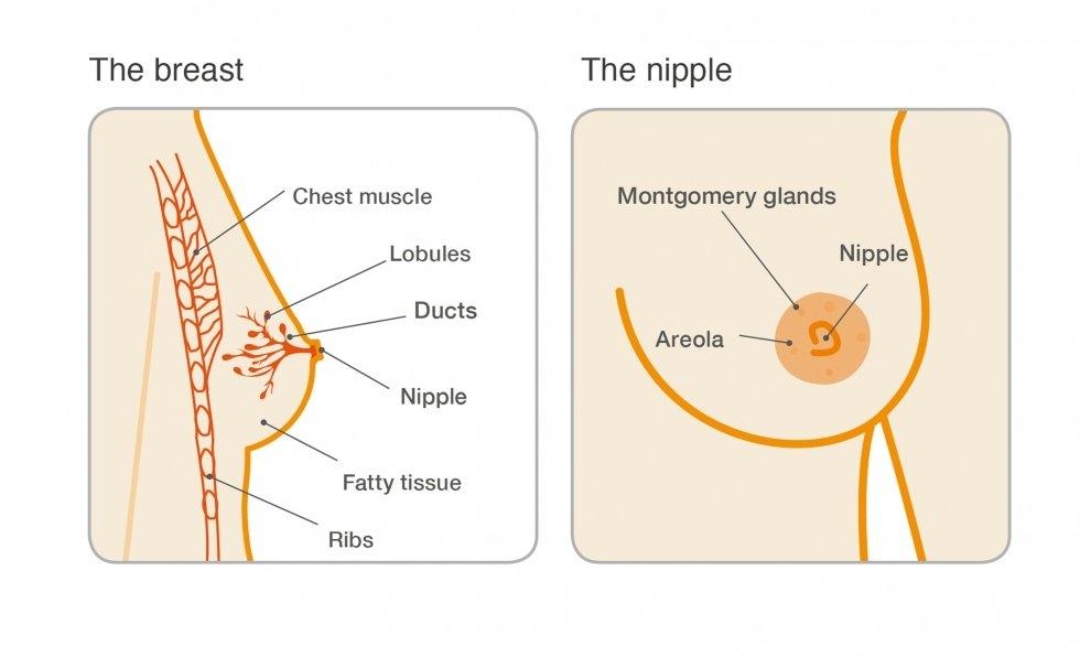ductalis papilloma tumor ajak papilloma vírus