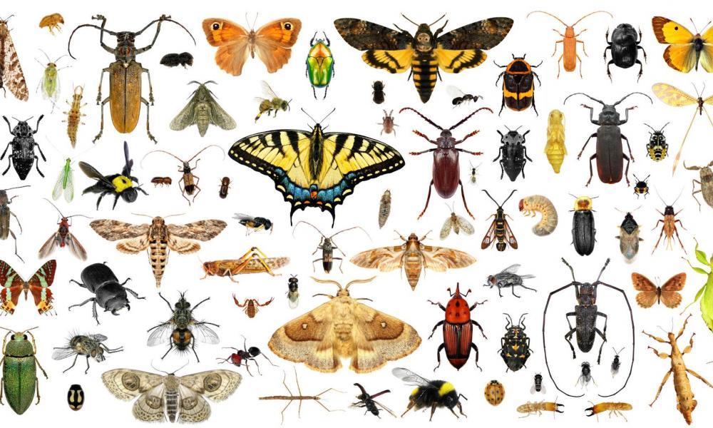 rovarok az emberekben