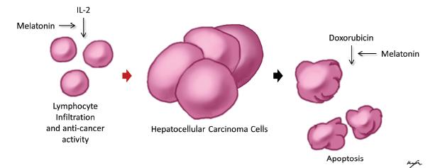 A condyloma acuminatum tünetei, kezelése és megelőzése • Ezerjófű Gyógynövénybolt