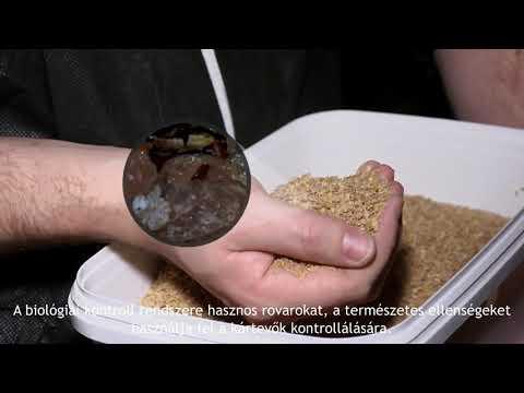 helmint fertőzés icd 10