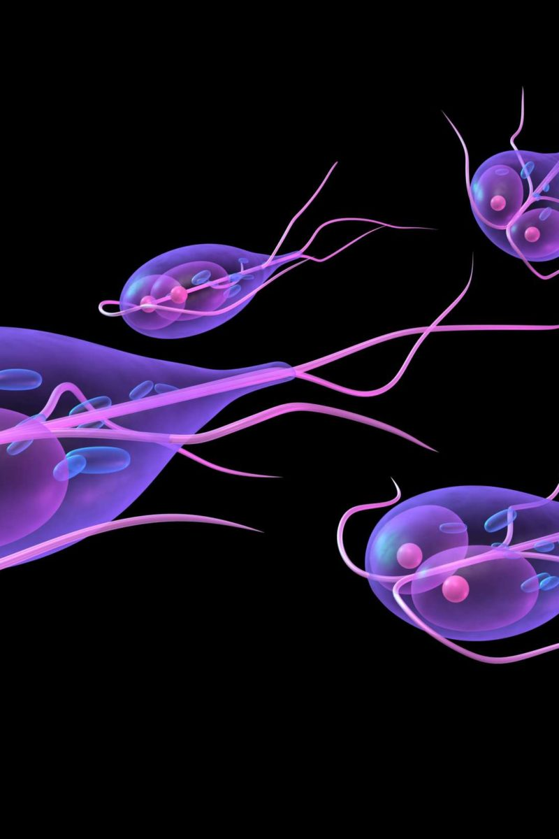 a giardiasis patológiájának sémája