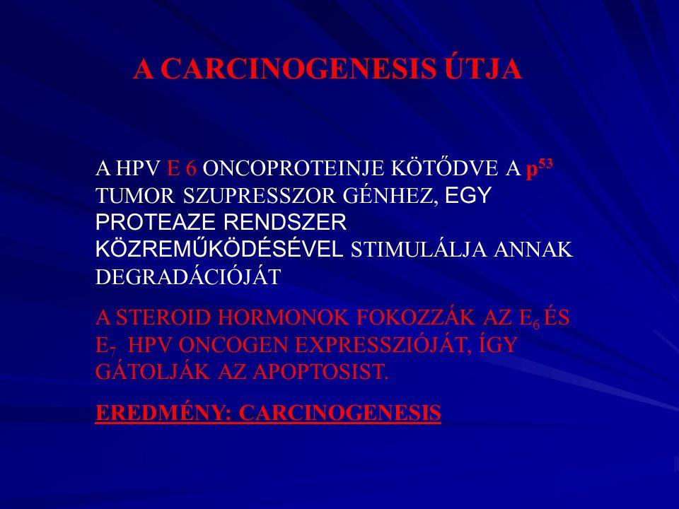 HPV oltás (Humán papillómavírus)