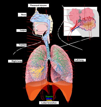 A gégeszűkület okai, tünetei és kezelési lehetőségei