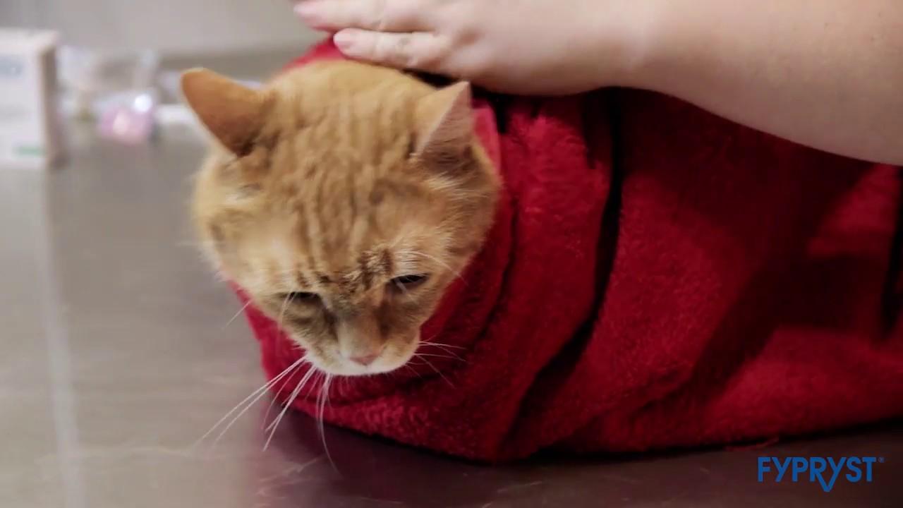 giardia macskák orvosság