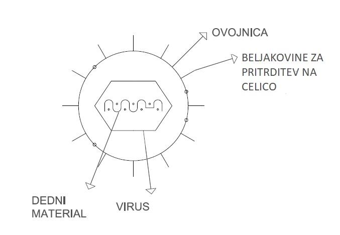 vírus z ovojnico átviteli torok vírus papilloma