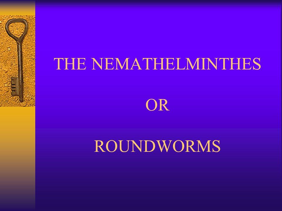nemathelminthes ppt
