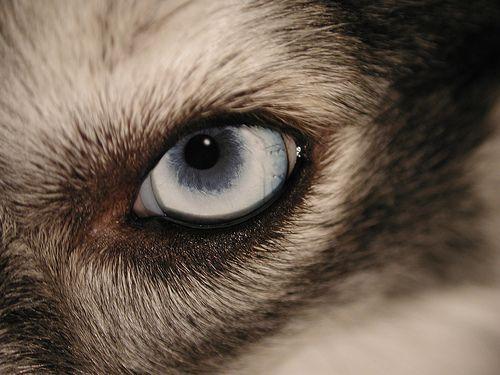 kutya szeme)