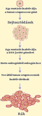 HIPEC: újabb esély daganatos betegeknek   nlc