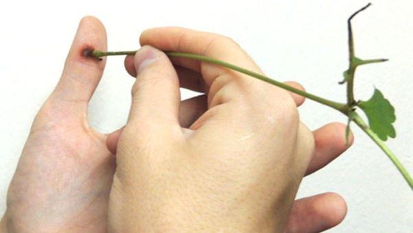Talpi szemölcs kriodestrukció, A bőrgyógyász legjobb tanácsai szemölcs ellen