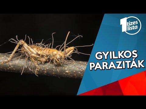 férgek és paraziták tisztítása)