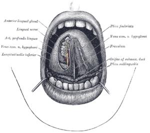 vastagbélrák útjai hpv rák oropharynx