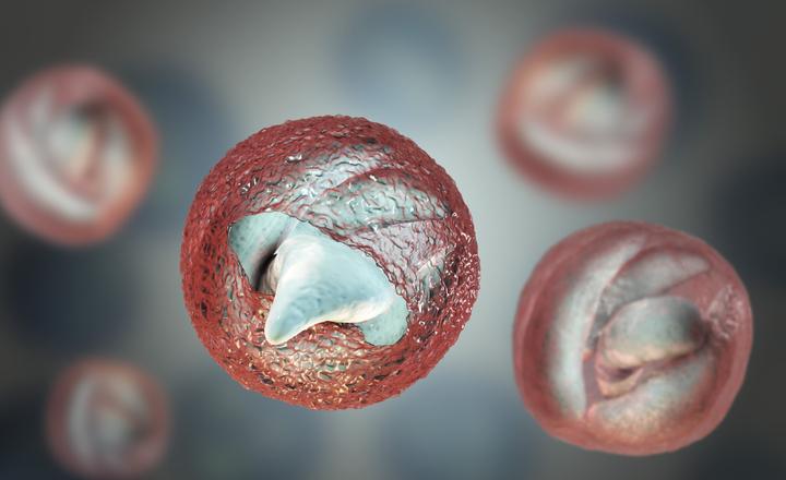 Giardia cryptosporidium screen. Labor árlista